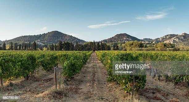 Vineyards, Les Baux-de-Provence, Cote d'Azur, France