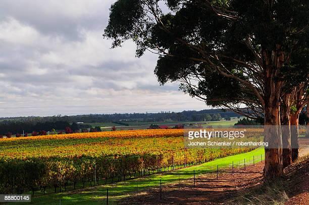 vineyards, manjimup, western australia, australia, pacific - western australia stock pictures, royalty-free photos & images