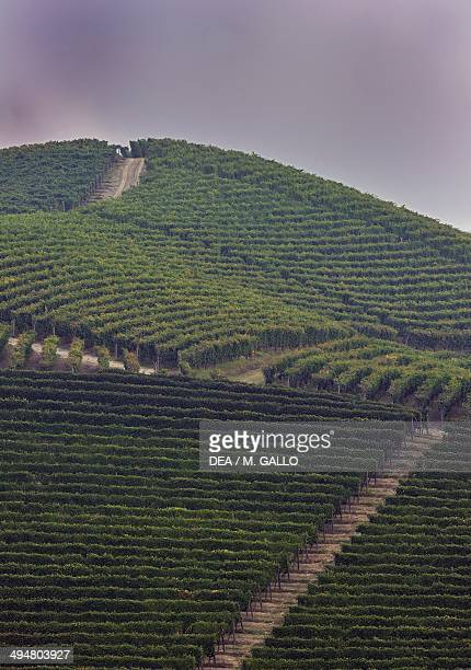 Vineyards near Barolo Langhe Piedmont Italy