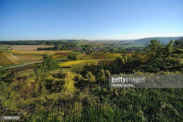 vineyards near bar-sur-aube, champagne, france, europe - michael mucha stock-fotos und bilder