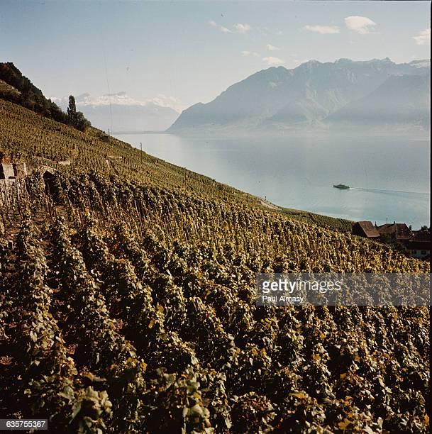 Vineyards near Lake Geneva Switzerland