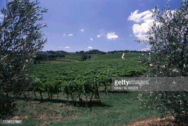 Vineyards near Montefalco, Umbria, Italy.