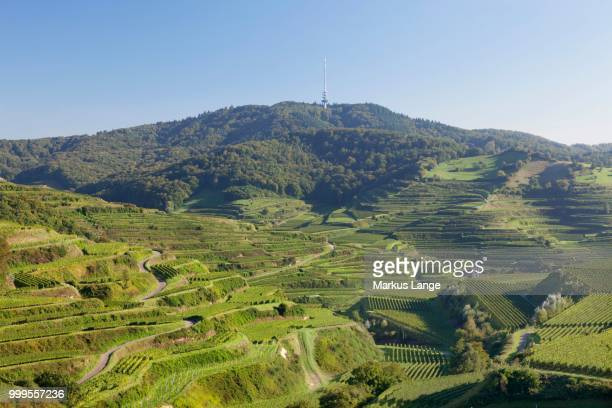 vineyards, near oberbergen, kaiserstuhl, black forest, baden-wuerttemberg, germany - baden württemberg stock pictures, royalty-free photos & images