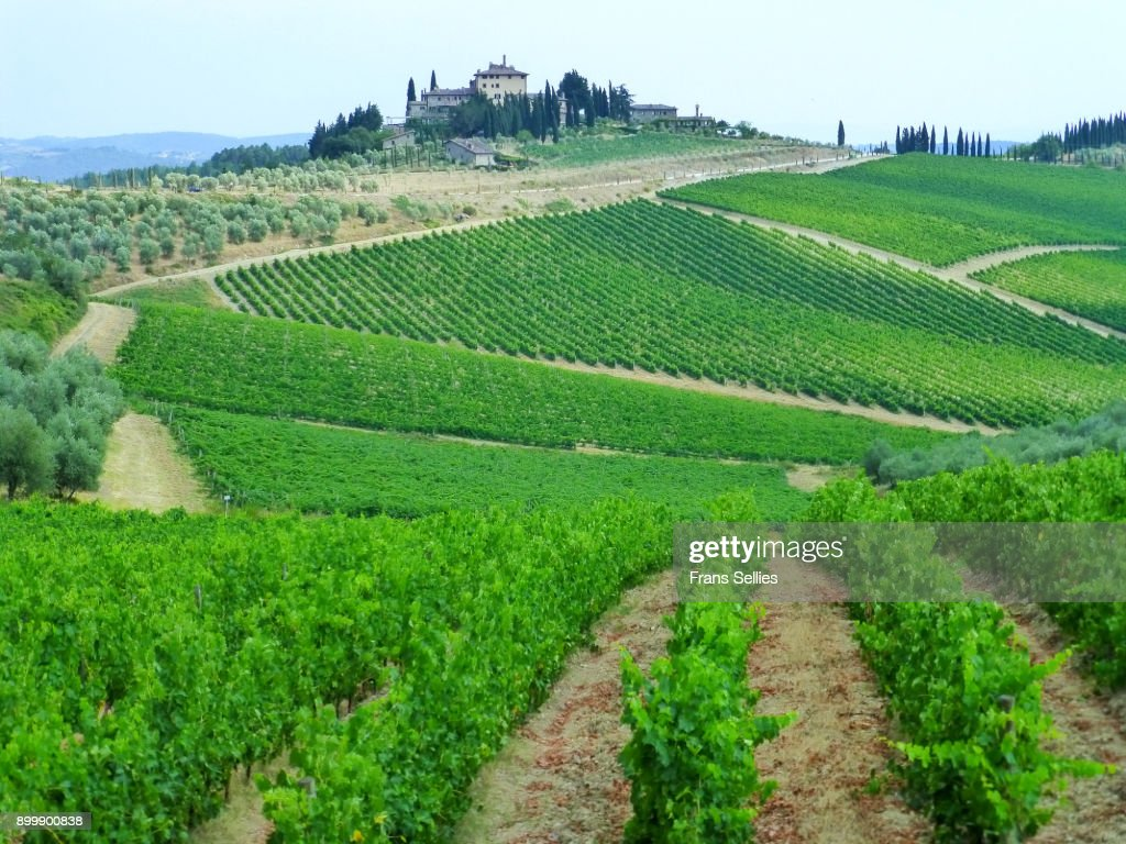 Vineyards Near Radda In Chianti Italy Stock Photo - Getty Images