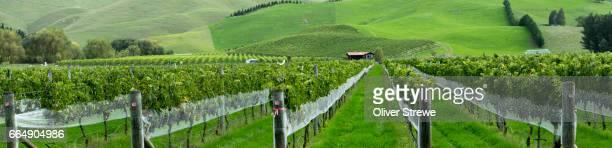 vineyards near takapau, new zealand - ホークスベイ地域 ストックフォトと画像