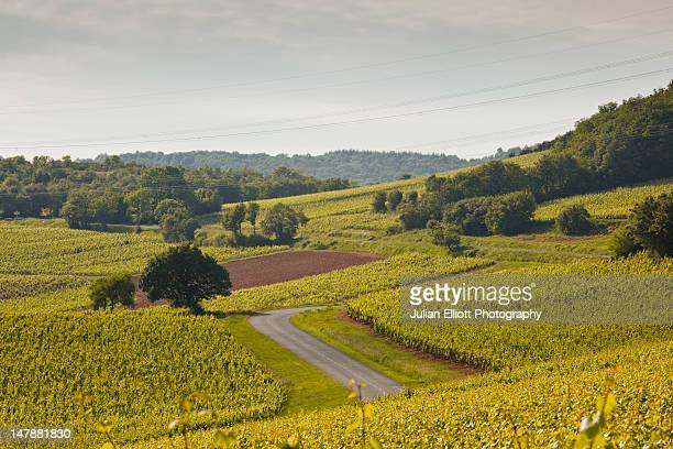 Vineyards near to Macon in Burgundy