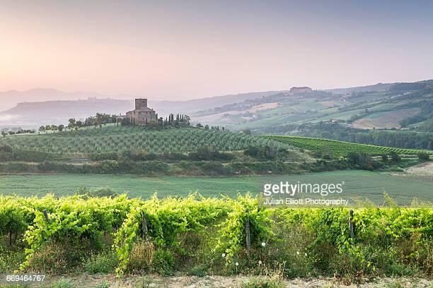 Vineyards near to Orvieto, Umbria.