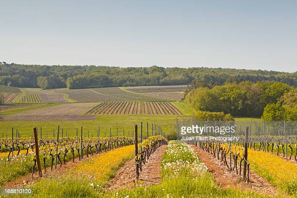 Vineyards near to Saint Preuil in France.