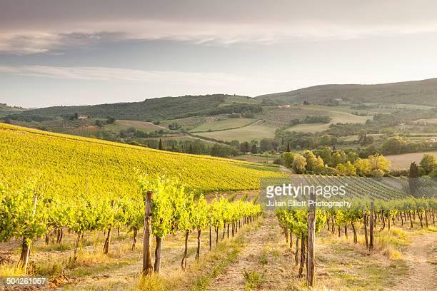Vineyards near to San Gimignano, Tuscany.