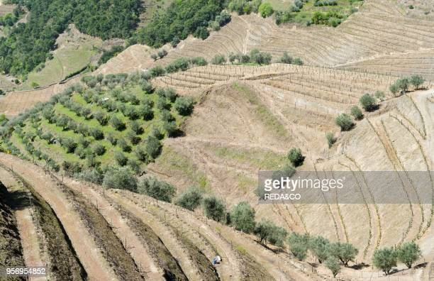 Vineyards near village Assento The valley of river Douro It is the wine growing area Alto Douro and listed as UNESCO World heritage Europe Southern...