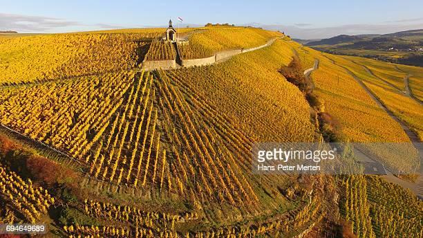 vineyards near wormeldange, moselle valley - moseltal stock-fotos und bilder