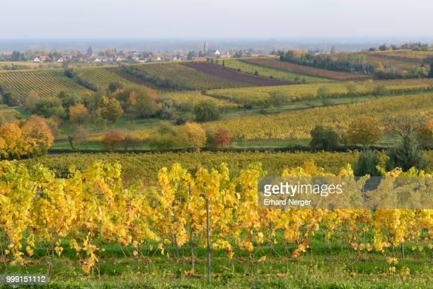 Vineyards, Neustadt an der Weinstrasse, Rhineland-Palatinate, Germany