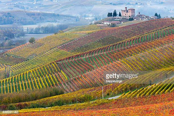 vineyards of barolo in piedmont - piedmont italy stock pictures, royalty-free photos & images