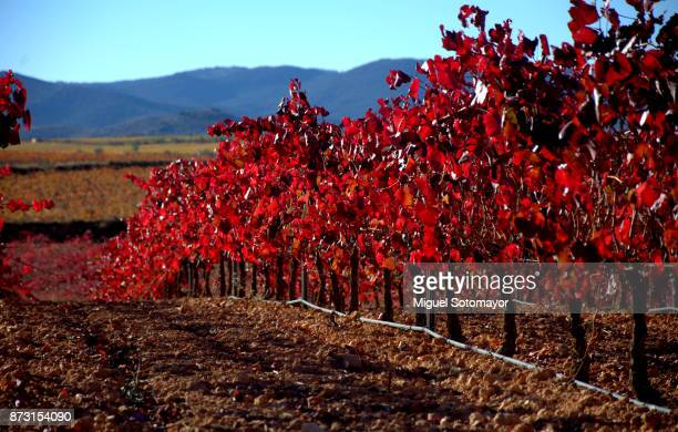 vineyards of cariñena - aragon stock photos and pictures