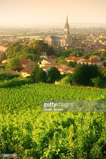 vineyards of cornas - rhone stock pictures, royalty-free photos & images