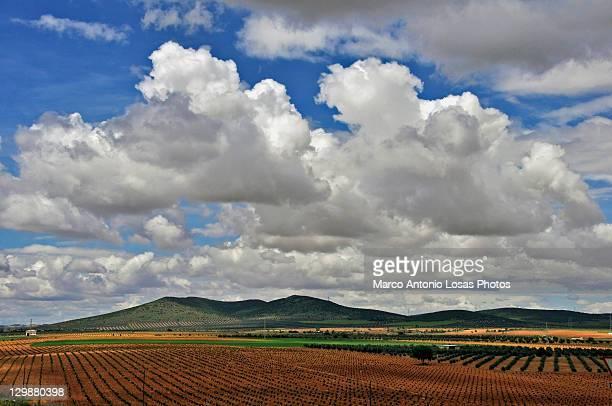 Vineyards of La Mancha