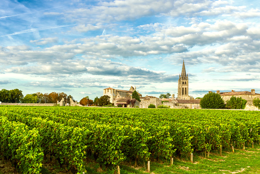 Vineyards of Saint Emilion, Bordeaux Vineyards in France 1047050912
