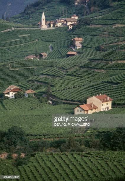 Vineyards of Santa Maddalena near Bolzano TrentinoAlto Adige Italy