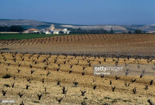 Vineyards of the Pedrosa town See panoramic of the vineyards and the town of Pedrosa Valladolid province