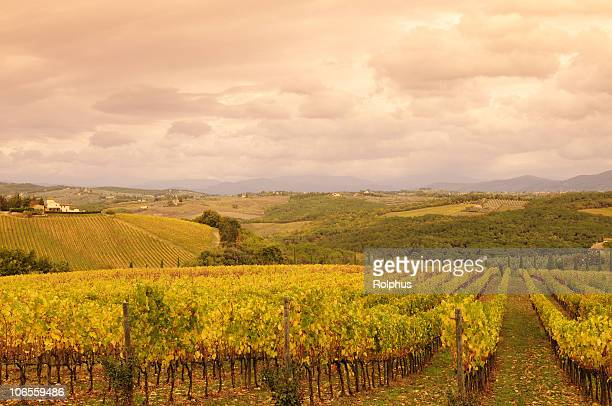 vineyards of tuscany chianti fall - sonnig stock pictures, royalty-free photos & images