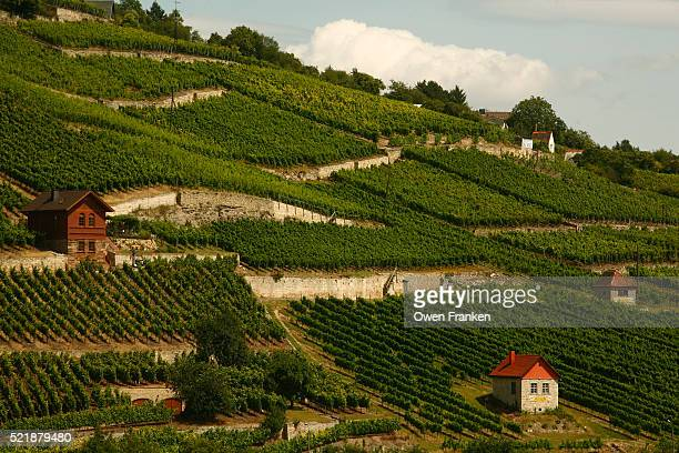 vineyards on hill - saxony anhalt stock pictures, royalty-free photos & images