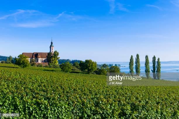 Vineyards on Lake Constance, Birnau pilgrimage church, Birnau, Baden-Wuerttemberg, Germany