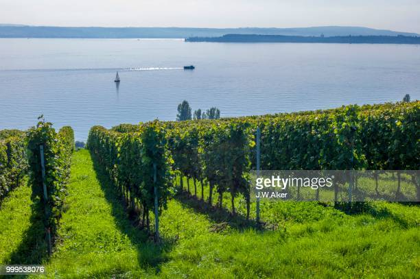 Vineyards on Lake Constance, Meersburg, Baden-Wuerttemberg, Germany