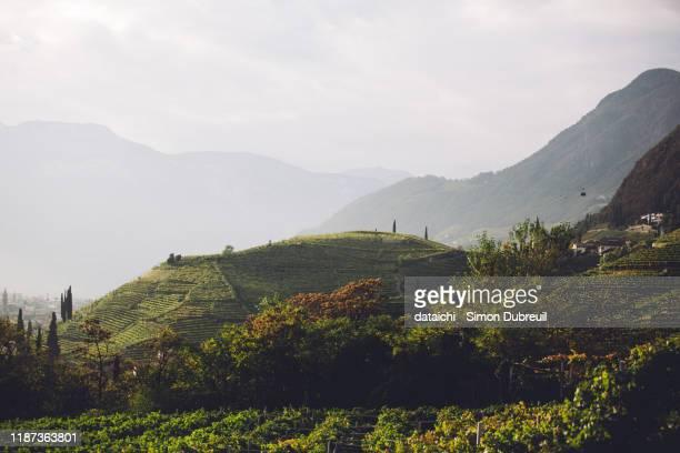 vineyards on the road to soprabolzano - alto adige bildbanksfoton och bilder
