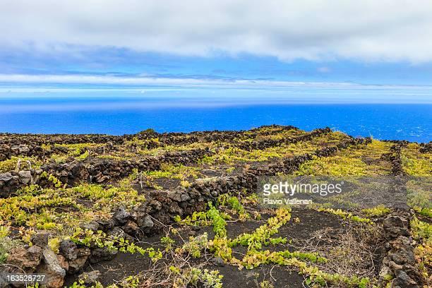 Vignobles sur les sols, activité volcanique de La Palma