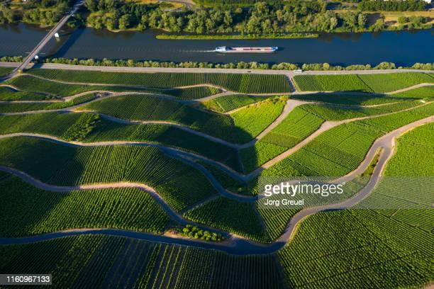 vineyards - moselle imagens e fotografias de stock