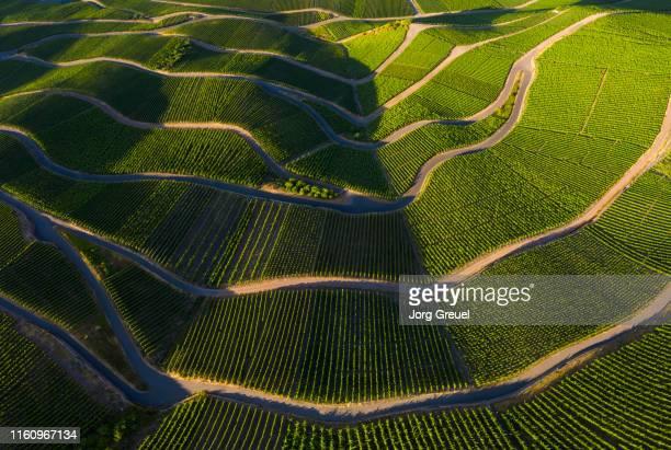 vineyards - terra coltivata foto e immagini stock