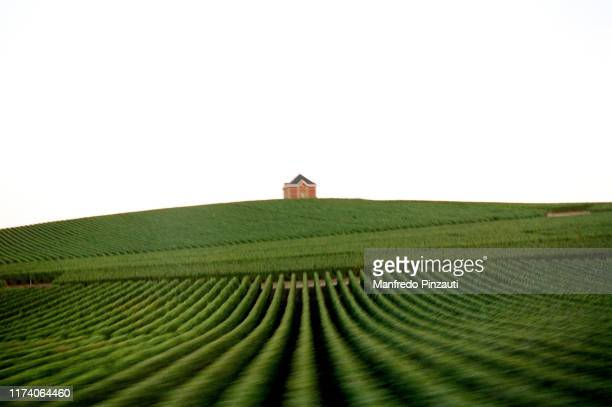 vineyards . - marne stock pictures, royalty-free photos & images