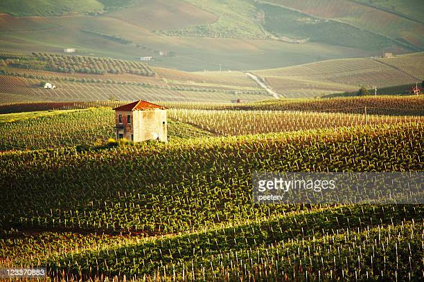 vineyards - sicily stock pictures, royalty-free photos & images