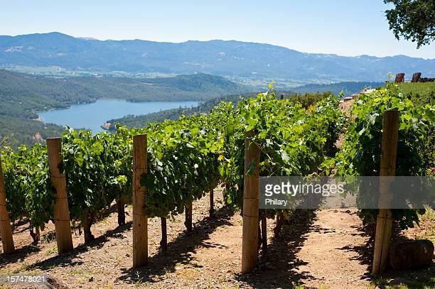 vineyards - sonoma county stock pictures, royalty-free photos & images