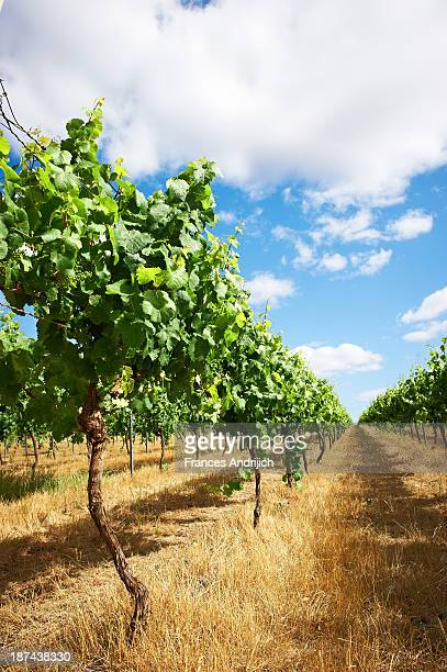 Vineyards