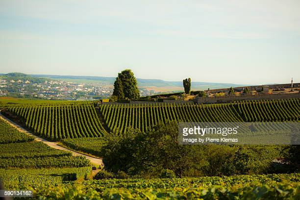 vineyards - campania stock pictures, royalty-free photos & images