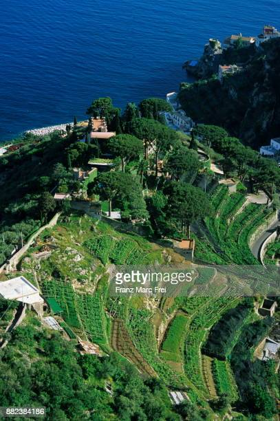 Vineyards, Ravello, Amalfi Coast, Campania, Italy