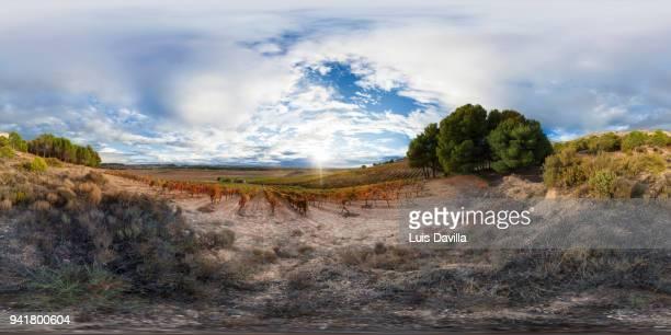 vineyards. ribera del duero. spain - vr 360 fotografías e imágenes de stock