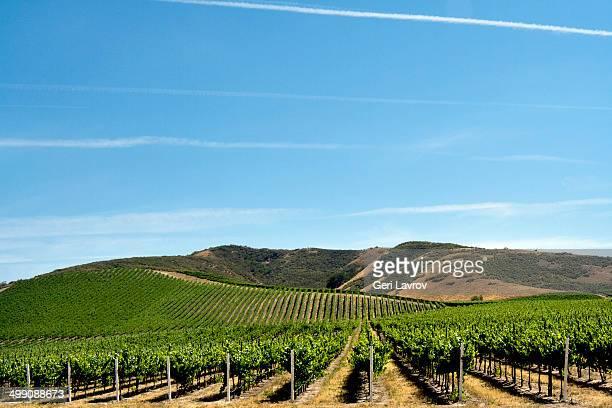 Vineyards: Santa Barbara County, California