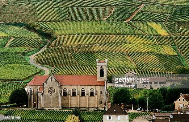 Vineyards surrounding village.