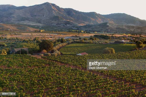 Vineyards thrive in the Alcantara valley on the northern side of the Mt Etna volcano Europe's largest and most active on September 22 2017 near...