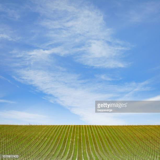 vineyards under blue sky - piedmont italy stock pictures, royalty-free photos & images