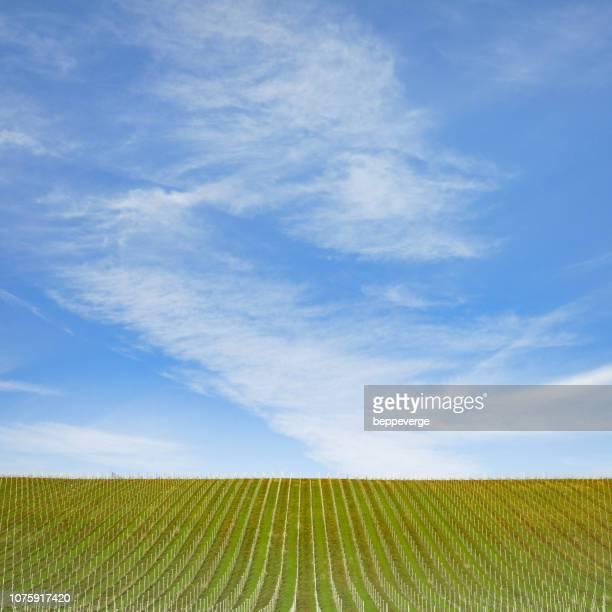 vineyards under blue sky - piemonte - fotografias e filmes do acervo