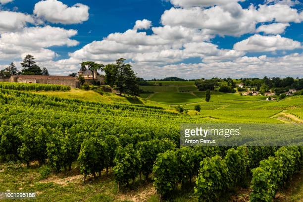 Vineyards under the beautiful sky with clouds. Gascony, France
