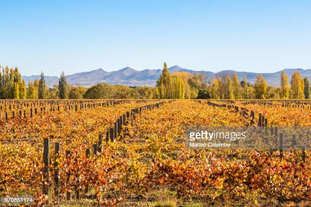 Vineyards, Waipara valley, North Canterbury, New Zealand