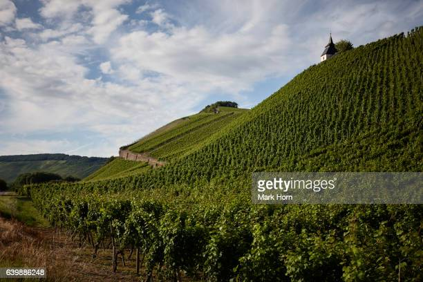 Vineyards with chapel between Klüsserath and Trittenheim in Moselle valley in summer, Germany