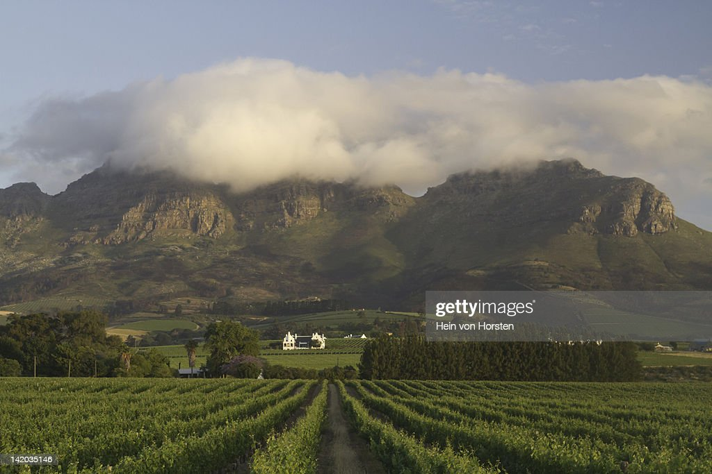 Vineyards with homestead near Stellenbosch, Western Cape, South Africa : Stock Photo