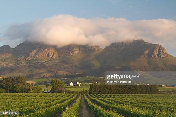 Vineyards with homestead near Stellenbosch, Western Cape, South Africa
