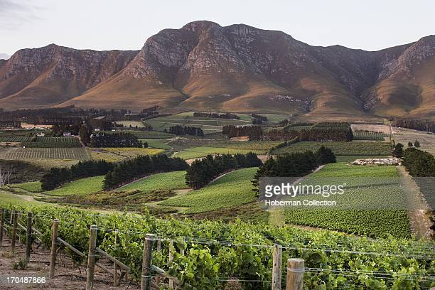 Vineyards with mountain in background