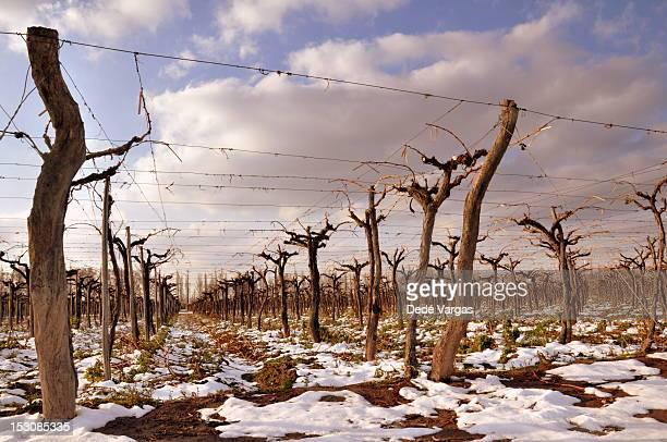 Vineyards with snow in Mendoza
